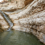 ArkImages.com - Shawn Benjamin Photography | Water Hole, Israel