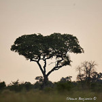 ArkImages.com - Shawn Benjamin Photography | Tree