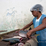 ArkImages.com - Shawn Benjamin Photography | Cleaning Fish, South Africa