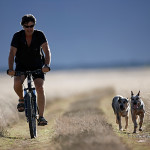 ArkImages.com - Shawn Benjamin Photography | Cycling with Dogs, South Africa