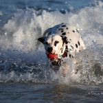 ArkImages.com - Shawn Benjamin Photography | Dog Swimming