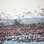 ArkImages.com - Shawn Benjamin Photography | Flamingos