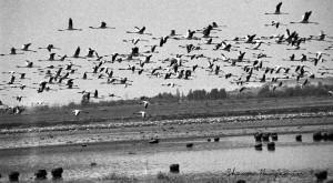 Ark-Images-Shawn-Benjamin-Flamingo-Kamfers-Dam.jpg