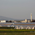 ArkImages.com - Shawn Benjamin Photography | Agriculture, Israel
