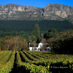 ArkImages.com - Shawn Benjamin Photography | Constrantia Winelands, Cape Town