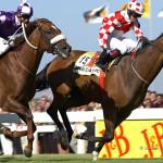 ArkImages.com - Shawn Benjamin Photography | Horse Racing