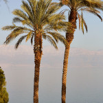 ArkImages.com - Shawn Benjamin Photography | Palms, Israel