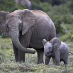 ArkImages.com - Shawn Benjamin Photography | African Elephant