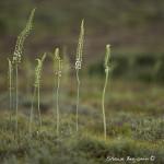 ArkImages.com - Shawn Benjamin Photography | Flower
