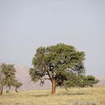 ArkImages.com - Shawn Benjamin Photography | Tree
