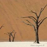 ArkImages.com - Shawn Benjamin Photography | Tree| Namib|Sossusvlei
