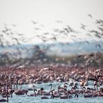 ArkImages.com - Shawn Benjamin Photography | Flamingos