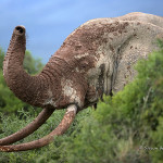 ArkImages.com - Shawn Benjamin Photography | Maddy Elephant