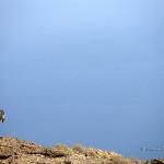 ArkImages.com - Shawn Benjamin Photography | Mountain Goat