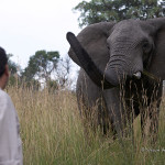 ArkImages.com - Shawn Benjamin Photography | Game Ranger + Elephant